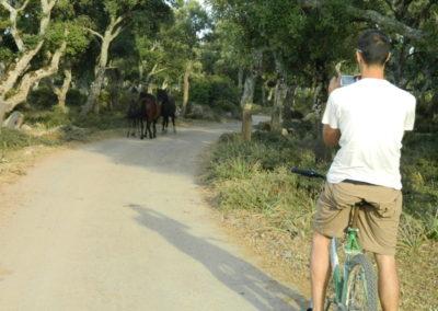 giara plateau divoke kone