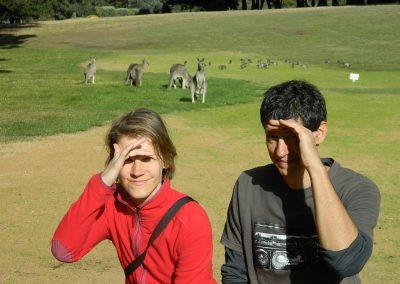 Kengury na golfovom ihrisku